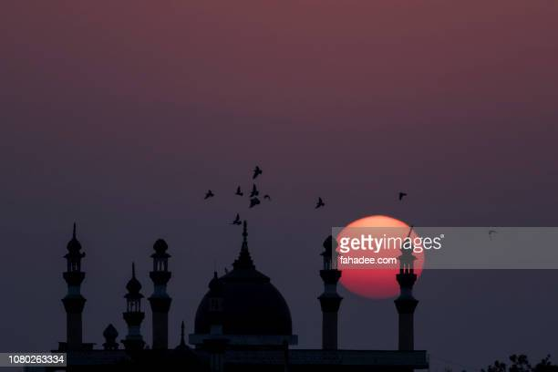 sunset and flying birds - pakistan stock-fotos und bilder
