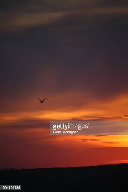 Sunset and Lone Seagull Flying