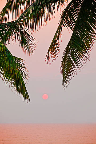 Sunset and palm, Koh Chang,Thailand