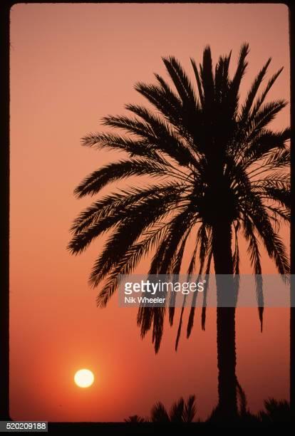 sunset and palm tree - djerba stockfoto's en -beelden