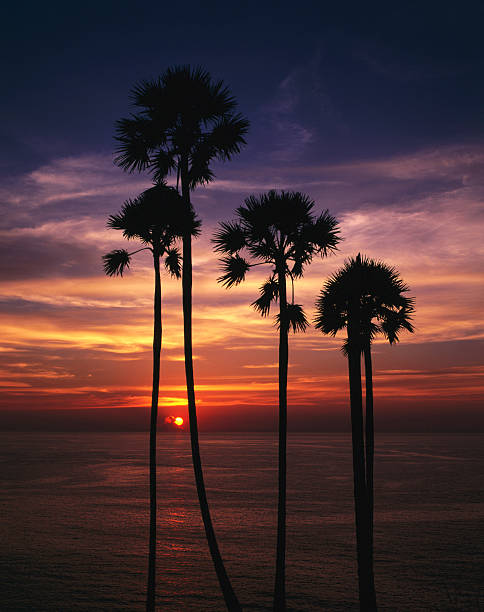 Sunset and silhouetted palm trees at Phrom Thep Cape, Thailand