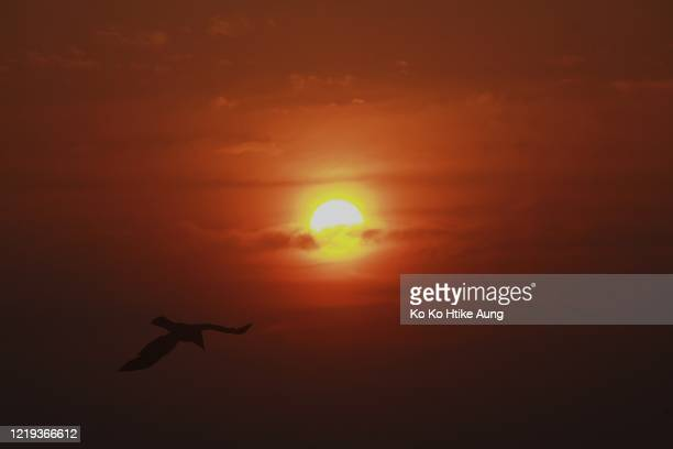 sunset and the crow - ko ko htike aung stock pictures, royalty-free photos & images