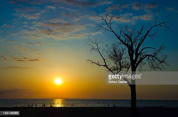 sunset and trees - rolour garcia stock pictures, royalty-free photos & images