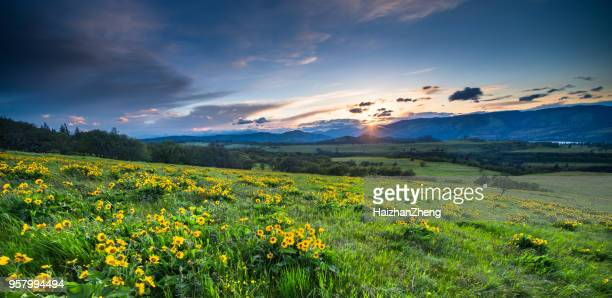 sunset and wild flowers - oregon stock photos and pictures