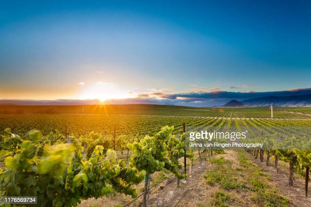sunset at a california vineyard with a  mountain in the back - ワイナリー ストックフォトと画像