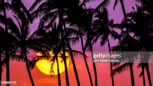 sunset at ala moana park - ココヤシの木 ストックフォトと画像