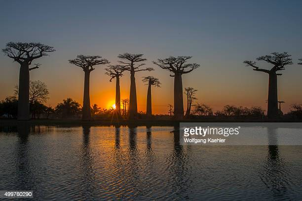 Sunset at Baobab Alley with pond in foreground near Morondava Western Madagascar