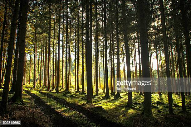 Sunset at Bavarian forest in autumn, Germany