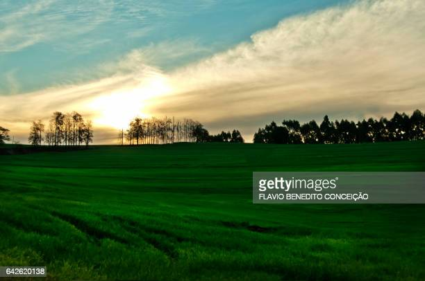 Sunset at dawn on an agriculture farm in the Londrina region of Brazil