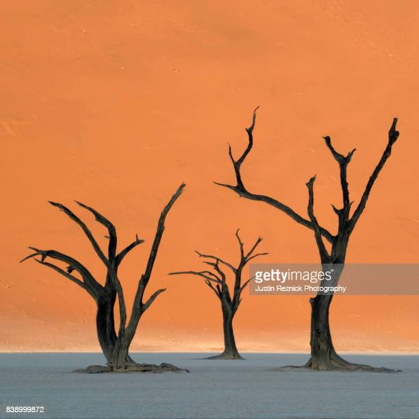 sunset at deadvlei, namibia - namib naukluft national park stock pictures, royalty-free photos & images