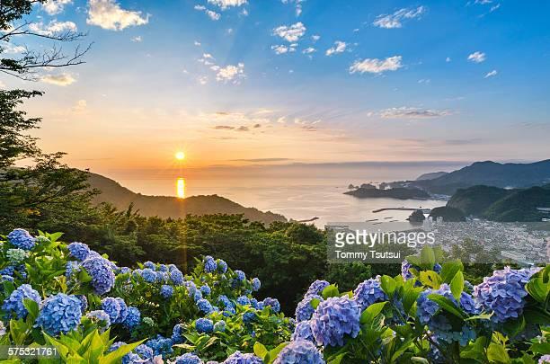 Sunset at Hydrangea Hills