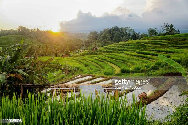 Sunset At Jatiluwih Rice Terraces In Bali, Indones