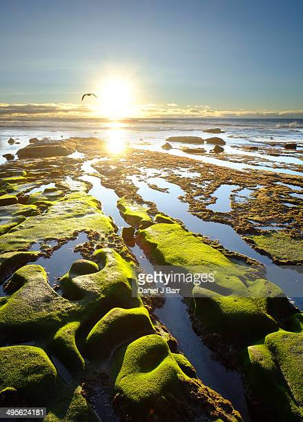 sunset at la jolla cove. - barr stock pictures, royalty-free photos & images