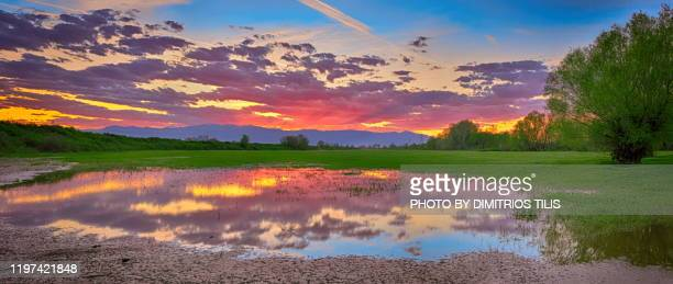 sunset at overflowed river pinios  panorana - dimitrios tilis stock pictures, royalty-free photos & images