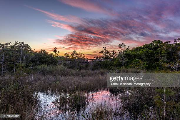 sunset at pa-hay-okee overlook, everglades national park, florida - everglades national park stock pictures, royalty-free photos & images