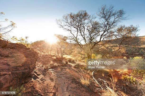 sunset at palm valley, fink gorge national park - flussbett stock-fotos und bilder