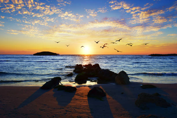 Sunset at rocky beach in Israel with seagulls flying above water, El Fureidīs, Israel