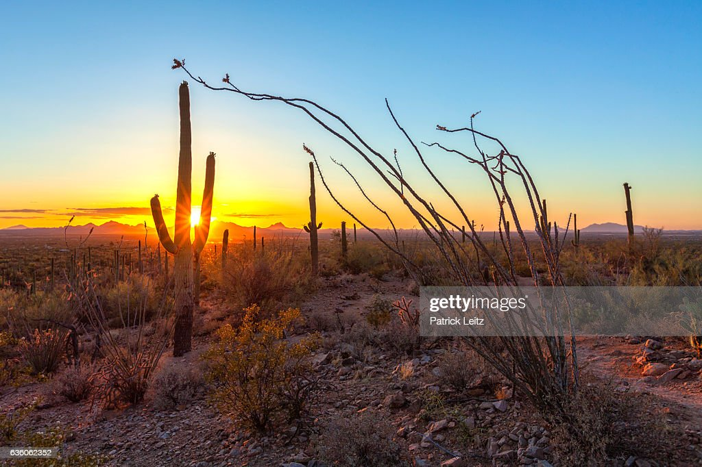 Sunset at Saguaro National Park, New Mexico : Stock Photo