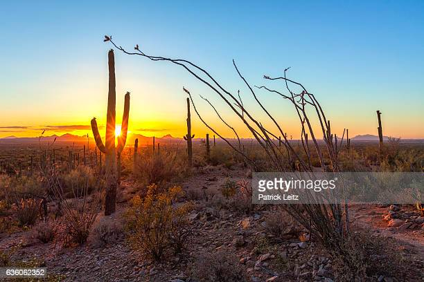 Sunset at Saguaro National Park, New Mexico