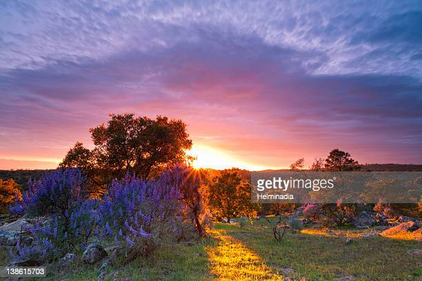 sunset at sonora valley - planchas_de_plata,_sonora stock pictures, royalty-free photos & images