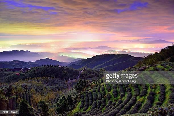 Sunset at tea field
