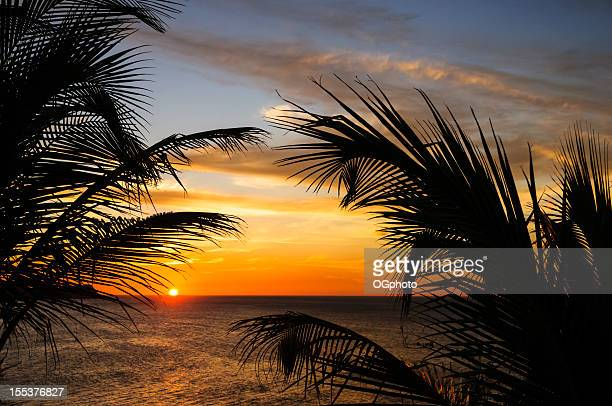 sunset at the beach framed by palm leaves - pacific ocean stock pictures, royalty-free photos & images