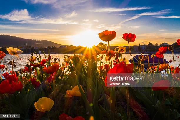 Sunset at the lake of Zurich in Spring