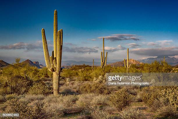 sunset at the superstition mountains, arizona - phoenix arizona stock photos and pictures