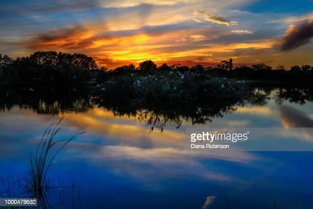 Sunset at the Venice Rookery, Venice, Florida