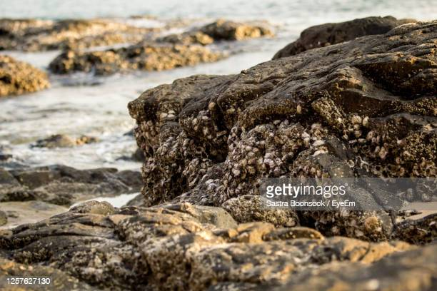 sunset beach - image title stock pictures, royalty-free photos & images
