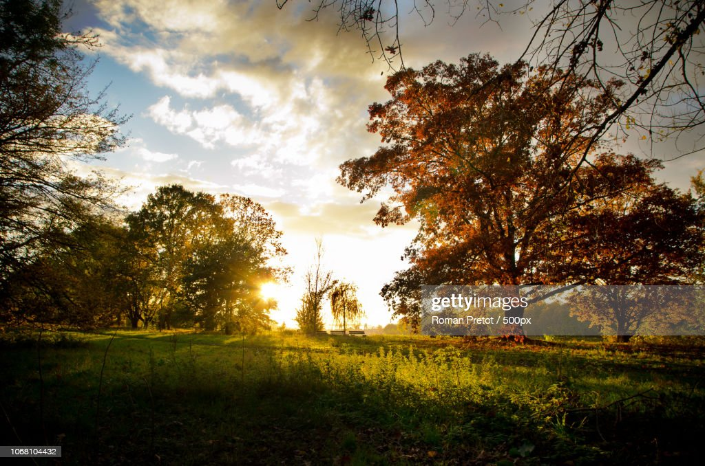 Sunset behind trees : Stock-Foto