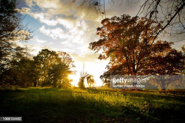 sunset behind trees - roman pretot stock-fotos und bilder