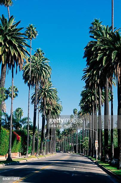 Sunset boulevard flanked by palm trees, Beverly Hills, Los Angeles, California, United States of America.