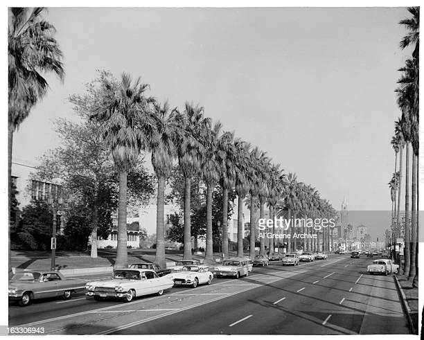 Sunset Boulevard lined with young palm trees as Automobiles breeze by in Los Angeles California 1955