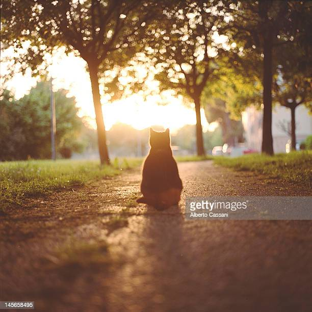 sunset boulevard. - boulevard stock pictures, royalty-free photos & images