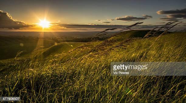 sunset breeze - アフィントン ストックフォトと画像