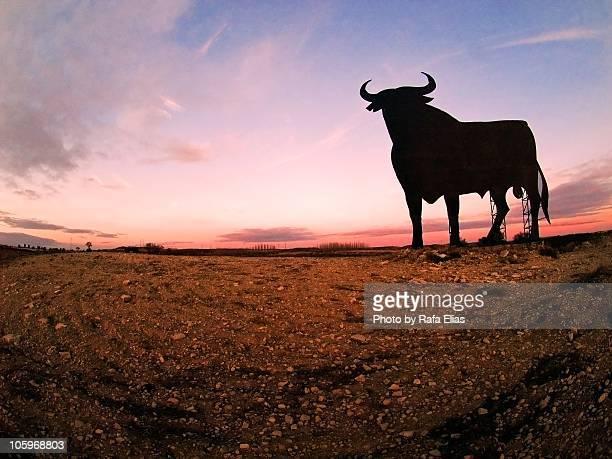 sunset bull - 雄牛 ストックフォトと画像