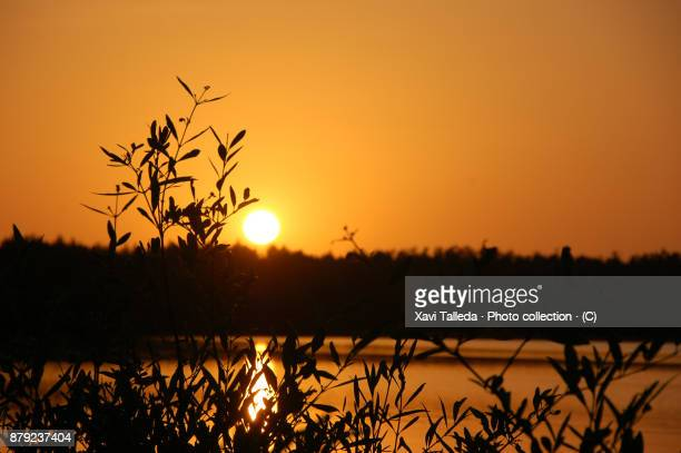 a sunset by the gambia river with leaves and trees - gambia fotografías e imágenes de stock