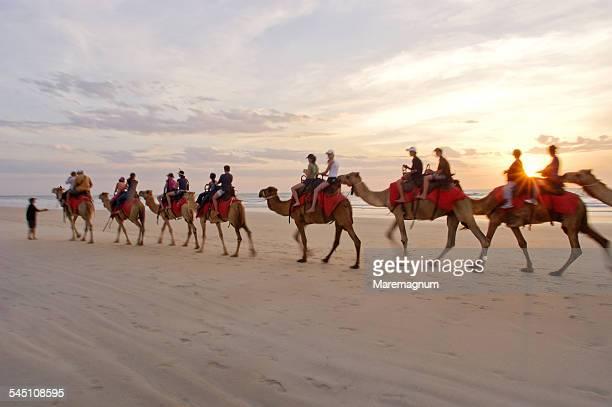 Sunset camel ride along the beach