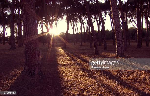 sunset casa de campo - campo stock pictures, royalty-free photos & images