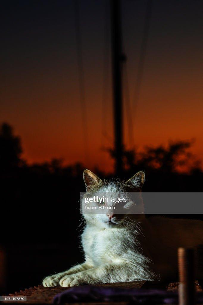Sunset Cat : Stock Photo