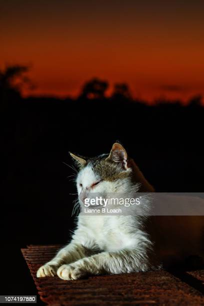sunset cat - lianne loach stock pictures, royalty-free photos & images