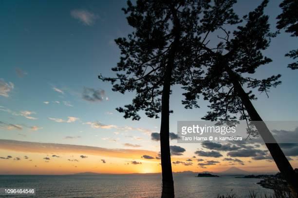 Sunset clouds on Mt. Fuji, Sagami Bay, Enoshima Island and Pine tree on Inamuragasaki in Japan