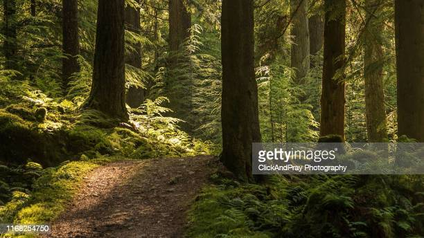 sunset corner - forest stock pictures, royalty-free photos & images