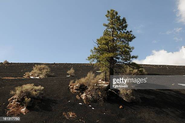 Sunset Crater Volcano National Monument is north of Flagstaff Arizona The volcano erupted sometime between 1040 and 1100 Lyn Alweis The Denver Post