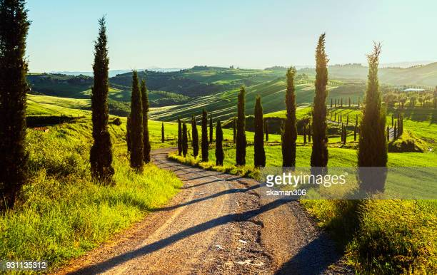 sunset cypress valley at toscana - cypress tree stock pictures, royalty-free photos & images