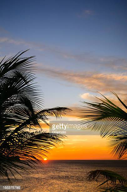 sunset framed by palm leaves - ogphoto stock photos and pictures