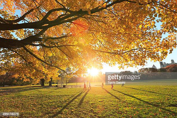 Sunset illuminates autumn color tree and children