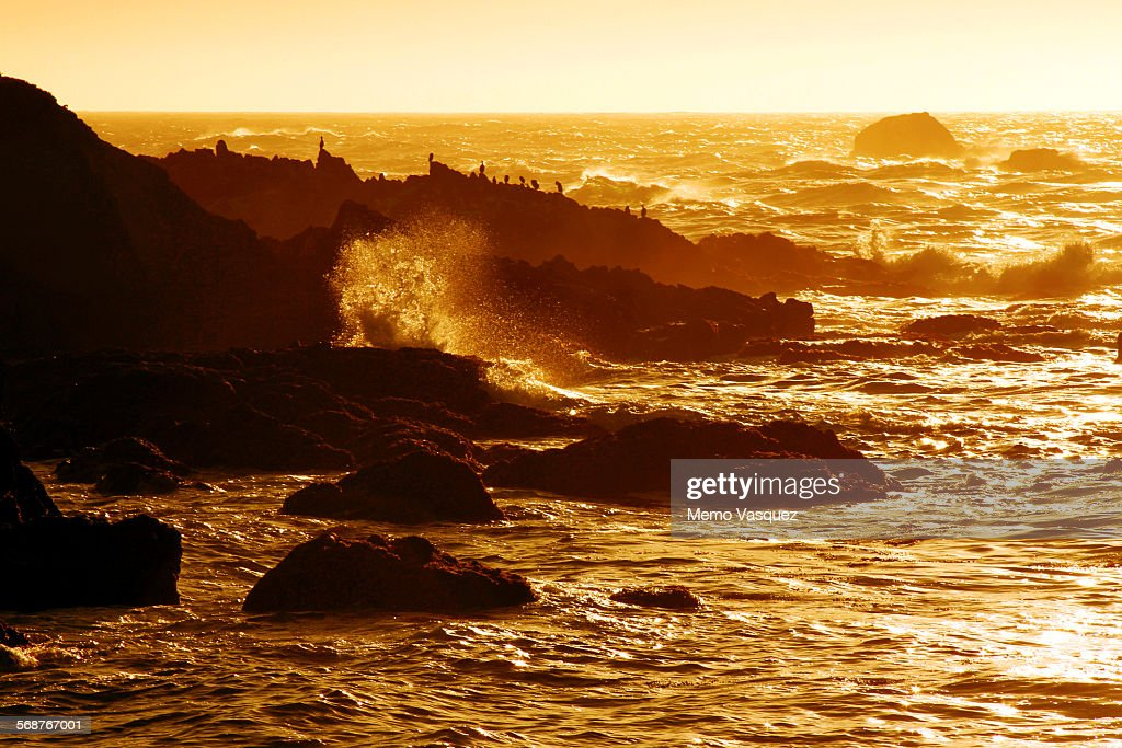 Sunset in 17 Mile Drive, California : Stock Photo