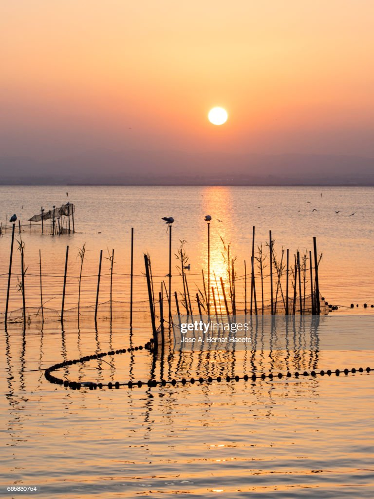 Sunset in Albufera lake, with sticks and handcrafted traps for the fishing, with a boat of wood with passengers in the lake , near Valencia, Spain. : Stockfoto